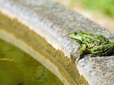 How to Get Rid of Frogs from Your Backyard: Easy Walkthrough 2020