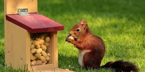 What to Feed Squirrels in Your Backyard to Make Them Go Nuts 2020