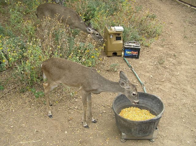 Feed Deer in your Backyard