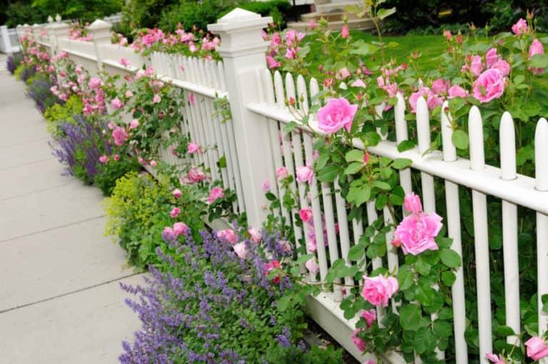 The Home Garden