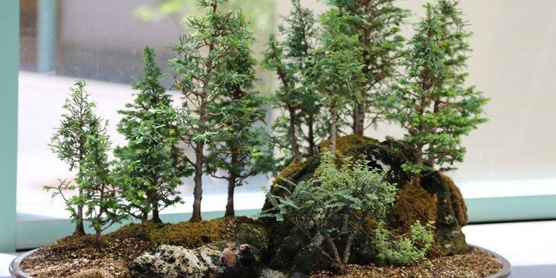 15 Beautiful and Smallest Bonsai Trees You Can Grow Indoors and Outdoors