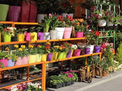 20 Best Online Gardening Stores