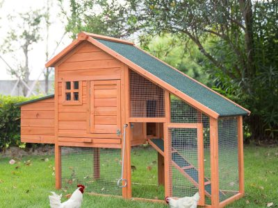 5+ Chicken Coop Door Ideas: Great Help to Get You Started