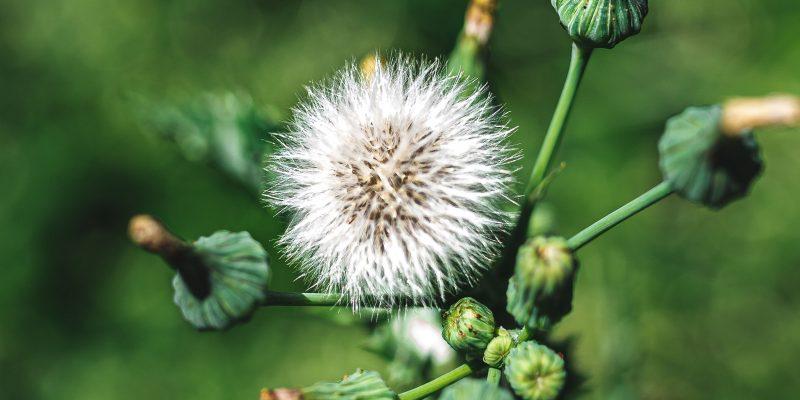 9 Different Types of Weeds: Common Garden Weed Species