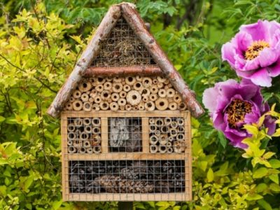 Grow a Bee Garden at your home