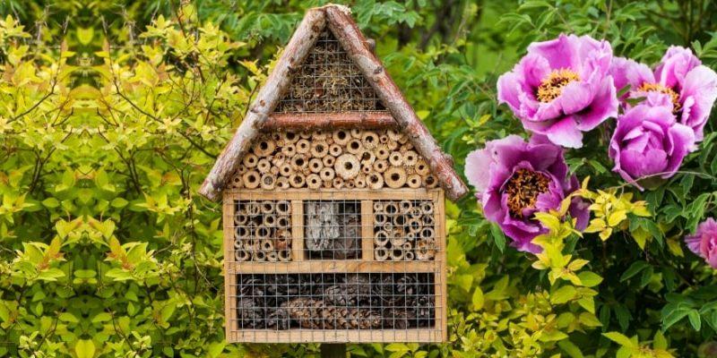 Grow a Bee Garden at your home
