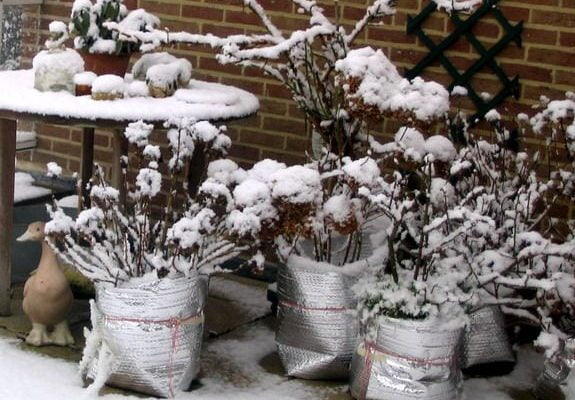 How To Protect Potted Plants from Freezing In Winter