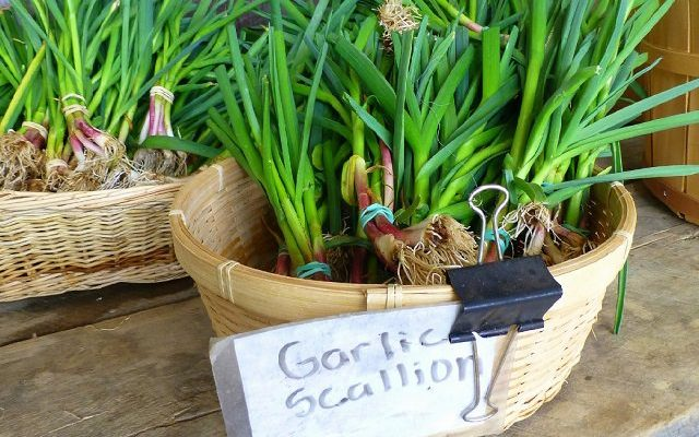 How to Grow Garlic in a Container Indoors