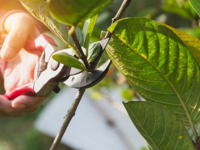 How to Remove Rust and Clean Your Pruning Shears