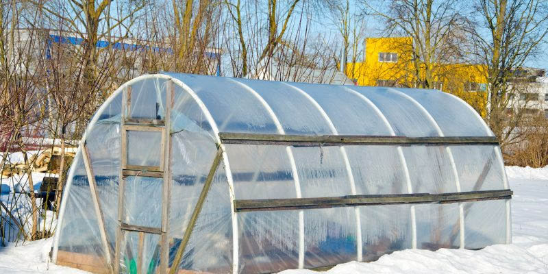 How to Use Greenhouse in Winter?