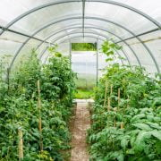 How to Use a Greenhouse for Beginners
