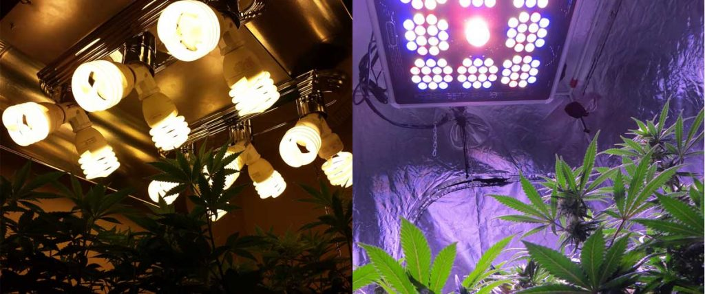 LED vs Fluorescent Grow Lights