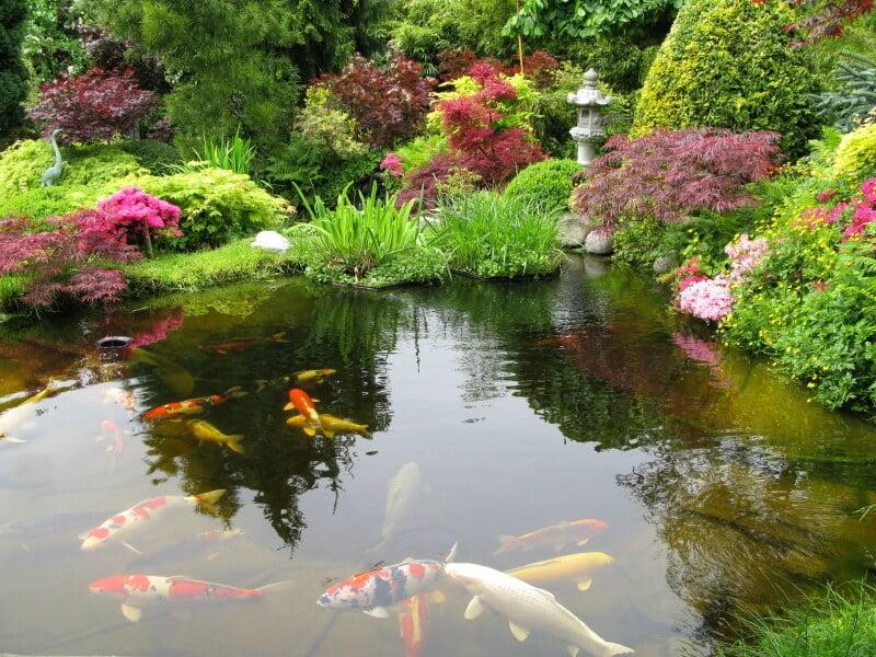 Large Pond for Larger Gardens