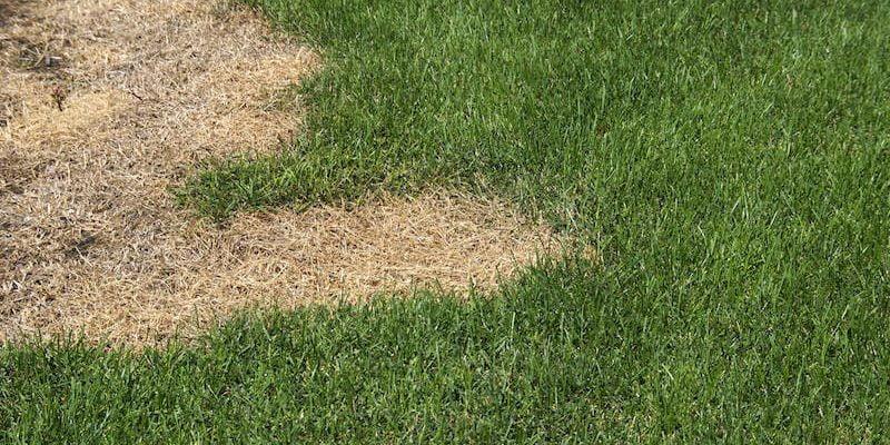 Lawn Fertilizer Burn