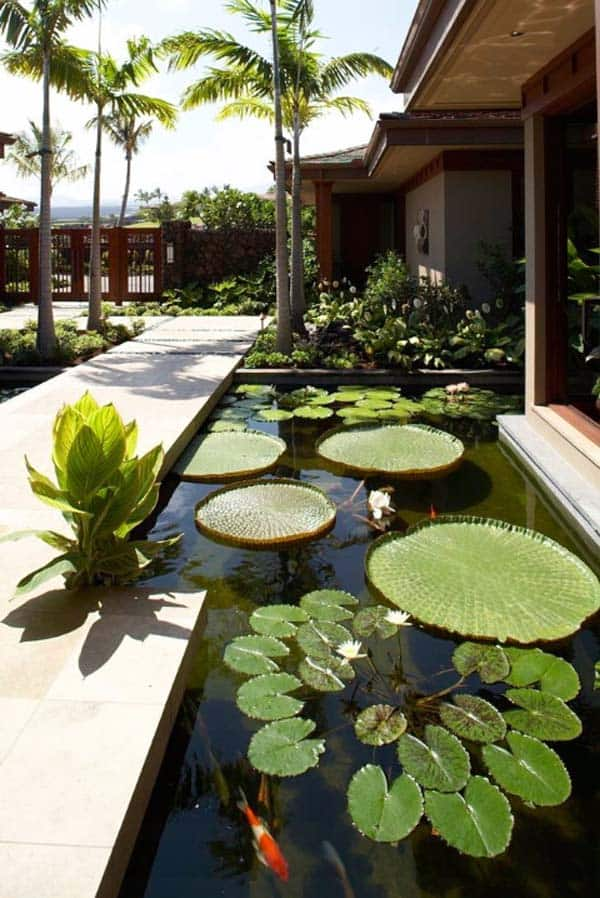 Pond with Water Plants