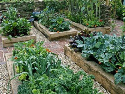 Vegetable Gardening for Beginners: Things to Keep in Mind
