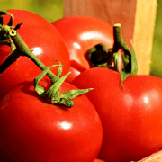 Will Mushroom Compost Yield Better Tomatoes?