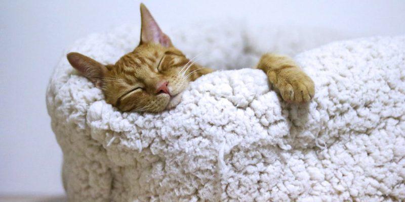 Orange Cat Sleeping on White Bed