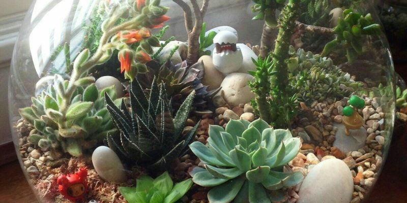 15 Succulent Terrarium Ideas