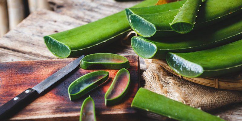 Aloe Vera Plant - Uses, Benefits, and Proper Plant Care