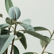 Best Low Light Indoor Trees and Large Plants for Your Home