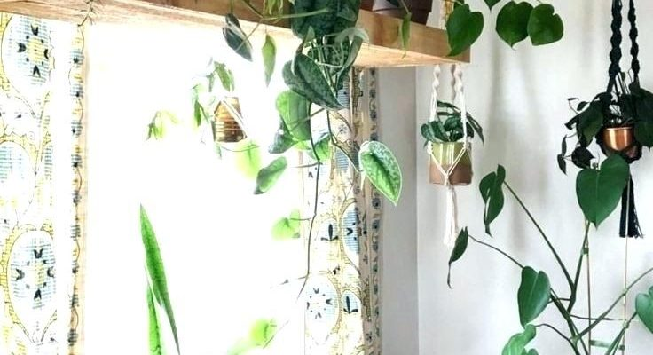 Best Plant Hangers for Your Room