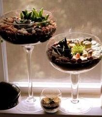 Champagne coupe Terrarium
