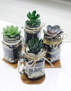 Classic Mason Jar Terrarium