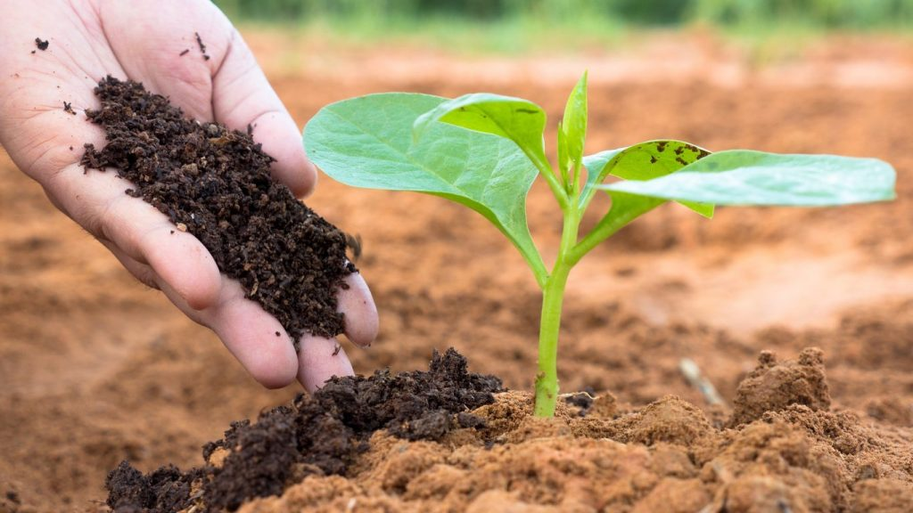 Compost Vs. Fertilizers: What is the best choice for your plants?