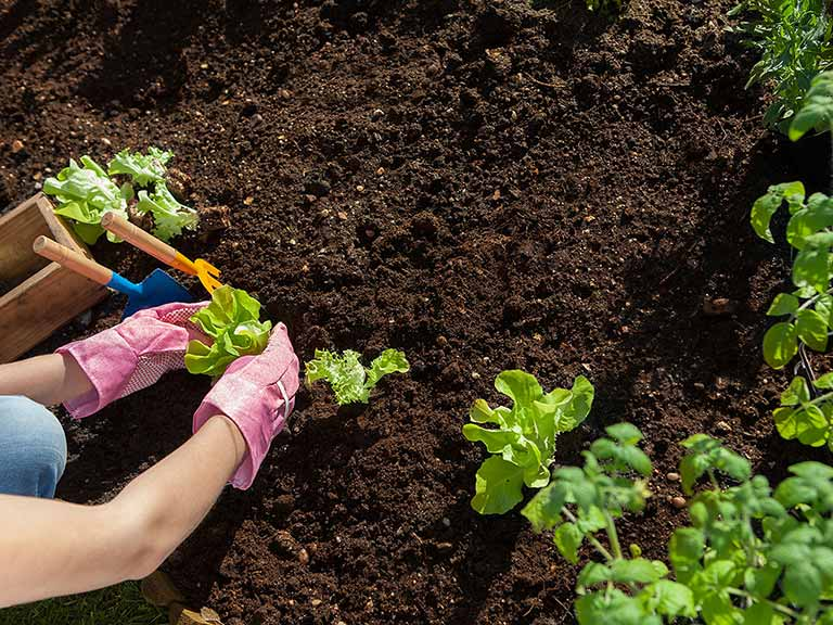 Compost vs. Manure: The Best for Your Soil Health
