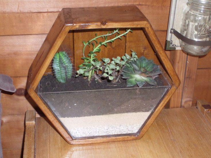DIY Hexagon Mini Garden
