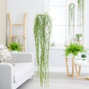Decorate Your Home with the Best Indoor Hanging Plants