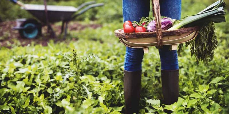 Everything You Need to Know to Start Your Own Garden