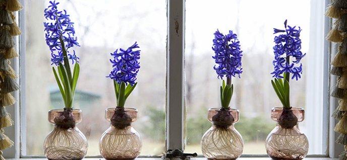 Grow Bulb Indoors