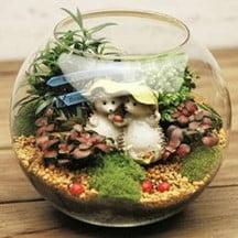 Hedgehog in a Fishbowl