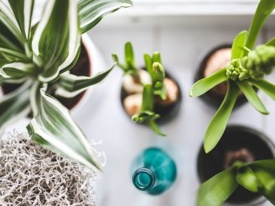 How to Identify House Plants Quickly