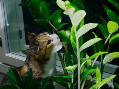 Is Succelents Poisonous to Cats? - How Succelents Affect Cats?