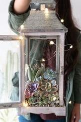 Lantern Terrarium with Fairy Lights
