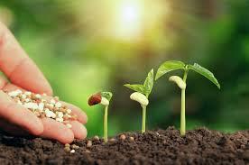 Liquid Lawn Fertilizer Vs. Granular Fertilizer