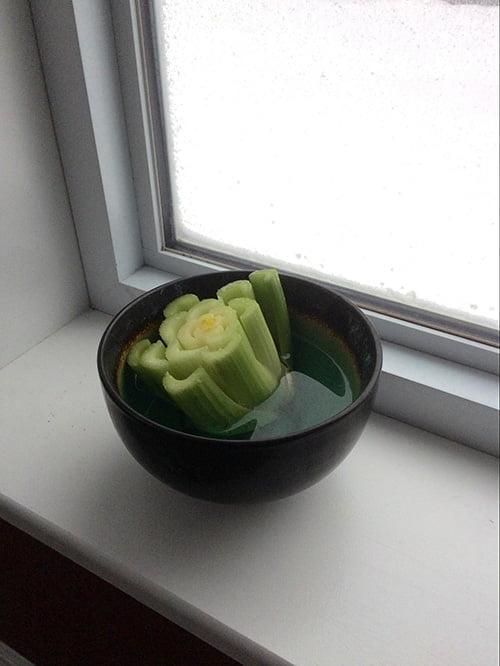 Resting Celery