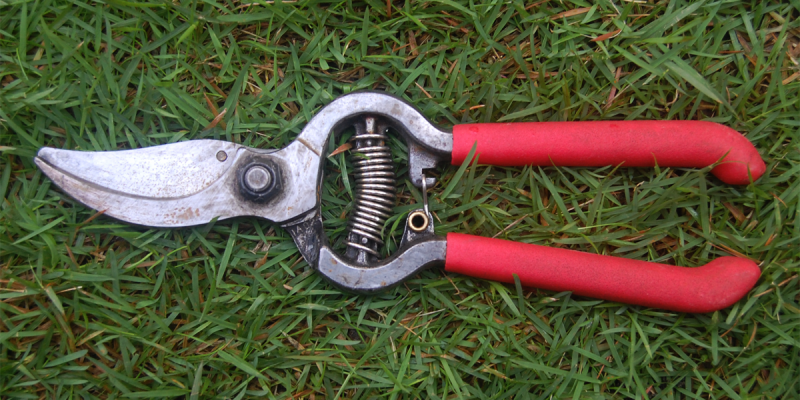 Sharpening Pruning Shears With the help of a File