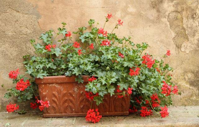 Terracotta Blooms