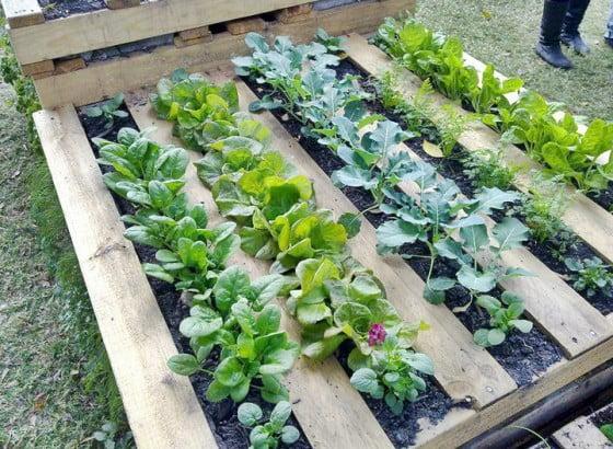 Veggie Pallet Planter