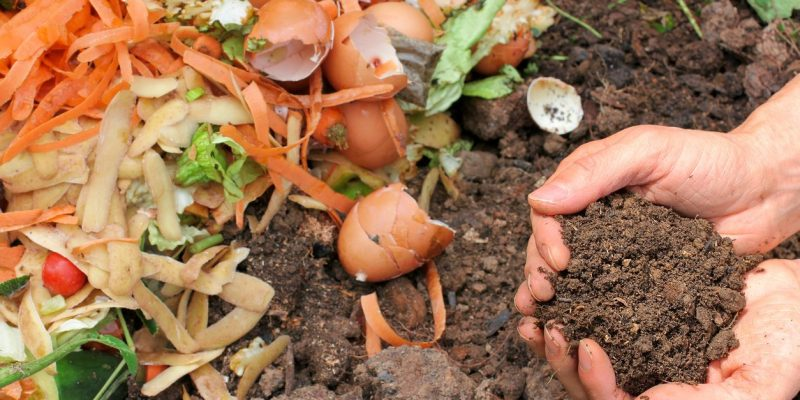 What to Compost or What Not to Compost