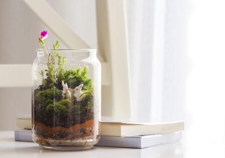 Wide-Mounted Jar Mini Garden