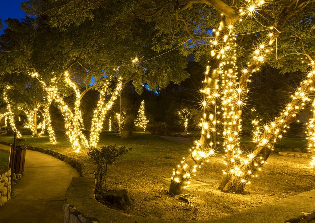 Wrap the trees with light