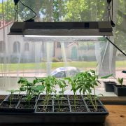 How to Use a Grow Light to Help your Plants Grow