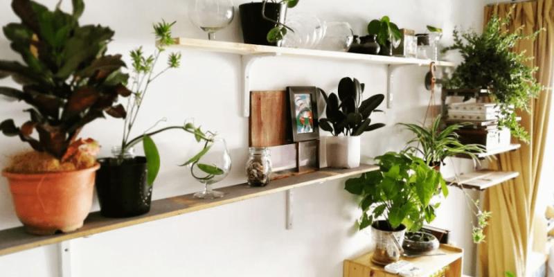 12 DIY Plant Stands & Shelves to Showcase Your Indoor Garden
