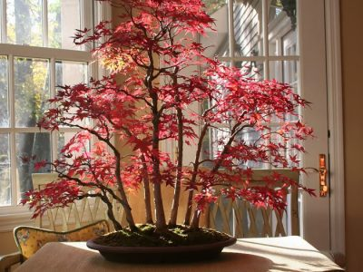 15 Of the Coolest Bonsai Trees for You