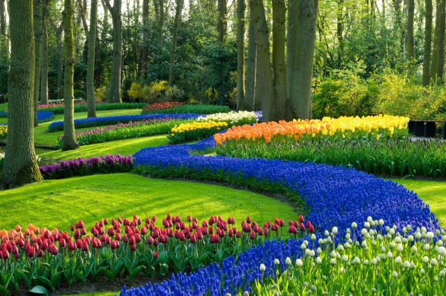 Amazingly Colorful Rows